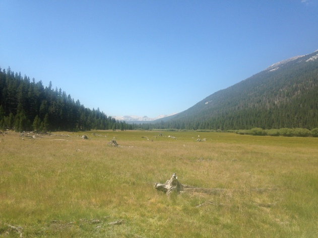 Tuolomne Meadow